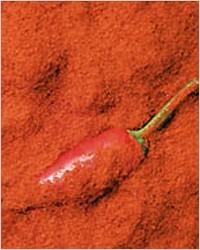 Паприка – молотый красный перец