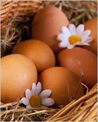 TOP 10 продуктов для красивых зубов - Яйца куриные