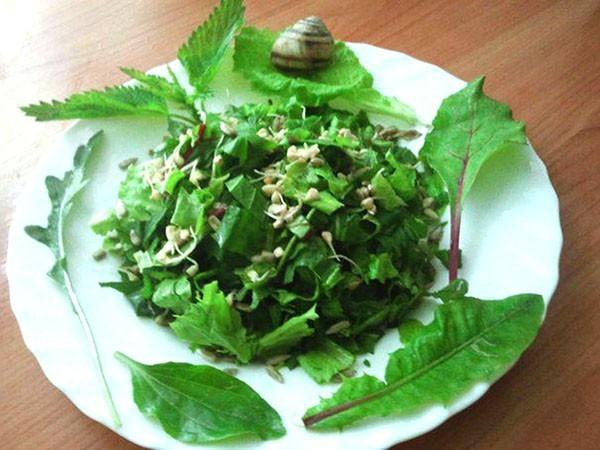 Салат с крапивой и одуванчиками