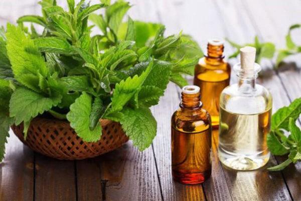 Мята широко используется в ароматерапии