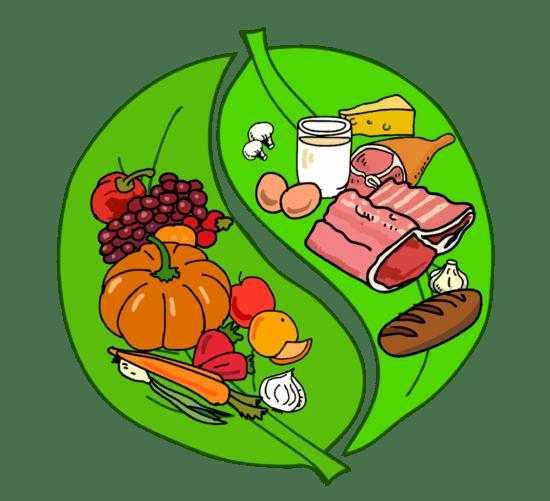 Жизненная энергия пищи