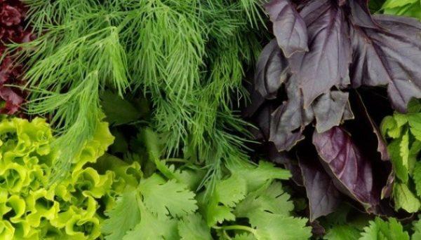 Как освежить увядшую зелень