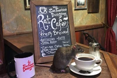 В Сан-Франциско открылось кафе где можно поесть с крысами