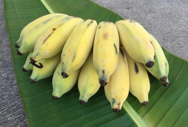 яблочные бананы